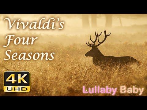 Vivaldi FOUR SEASONS ♫ Beautiful 4K UHD Video ✰ FULL Concert ✰ SPRING, SUMMER, AUTUMN, WINTER