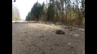 Guy steps on frog, crushes it. Splatter