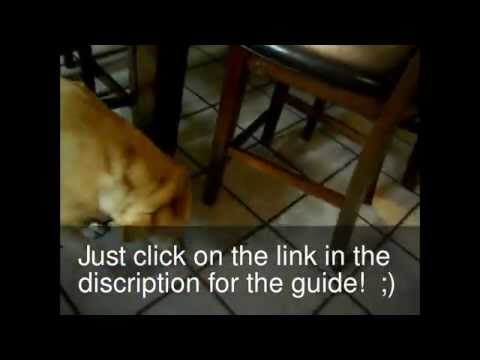The way to put your dog on diet ( Fat dog lose weight)