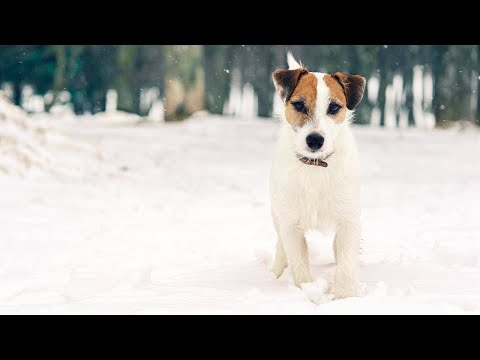 How to Protect Your Dog's Paws From the Snow, Salt and Ice During the Winter