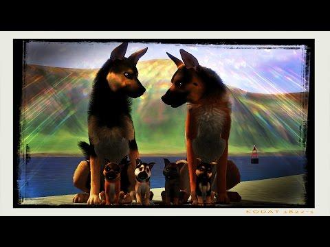 Breeding German Shepherds! ~ Kennel AngelPaws - Sims 3 Pets