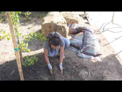 2016 Arbor Day Awards—Public Awareness of Trees Award: California ReLeaf