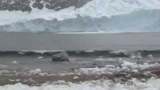 Penguins Run For Their Lives from Tsunami Wave From Calving Glacier