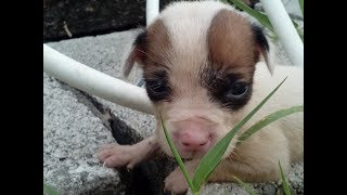 PUPPY GIVEAWAY !! (( closed )) SUBSCRIBE!