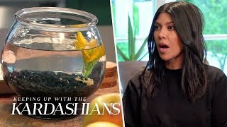Kourtney Overstays At Kendall's And Almost Murders Her Fish   KUWTK   E!