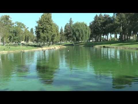 Algae Blooms Kill Fish Population In Turlock