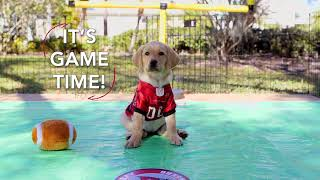 Superheroes at the Super Bowl | Southeastern Guide Dogs