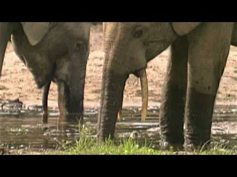 Blood Ivory: Stop Elephant Poaching Today!