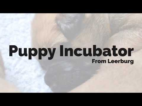 Puppy Incubator - Product Review