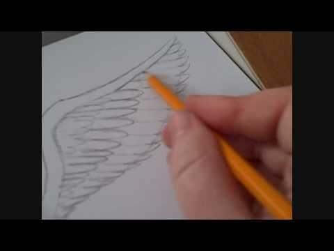 How To Draw An Angels Wing Video