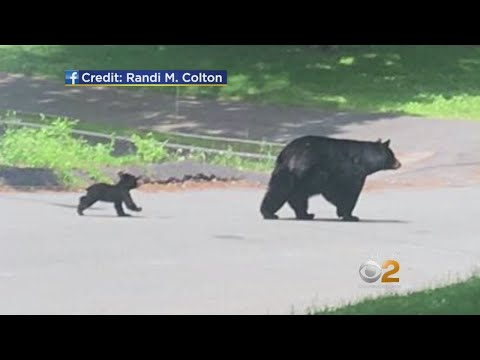 Bear Warning Issued For Several Neighborhoods In Rockland County