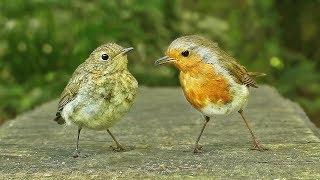 Vidéos pour Chats : Oiseaux et Écureuils