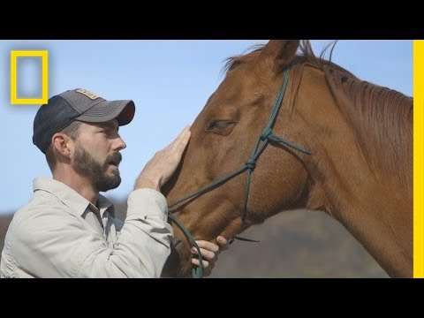 Horses Help Heal Veterans' Invisible Wounds | National Geographic
