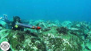 Ψαροντούφεκο Τρόπος Ζωής 🌊 ☀️ | Spearfishing the Aegean 🇬🇷 ✔