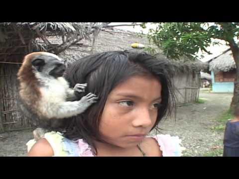 Lice and Fleas of Costa Rica-Some Pretty Gnarly Stuff