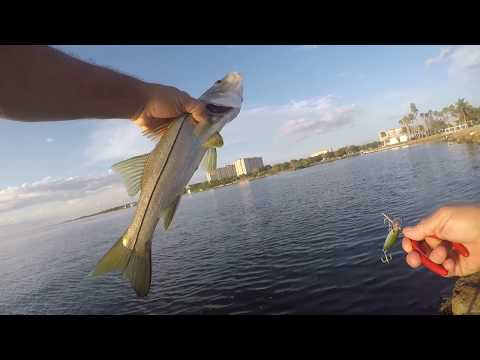 Fishing Rocks Inshore Snook Jacks Grouper Lady Fish Using Lures