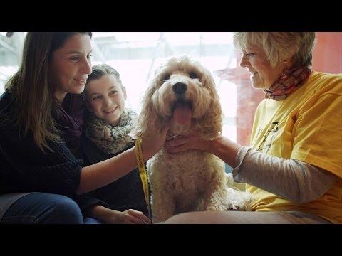 Dog Helps Sick Child   Secret life of Dogs   BBC