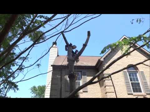 Cutting a Tree Down from top to bottom