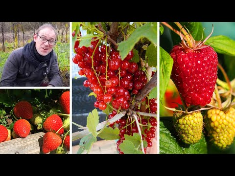 Growing Soft Fruits for Beginners