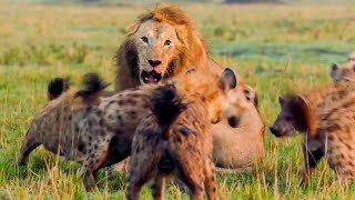Best Lion Moments: Part 1   Top 5   BBC Earth