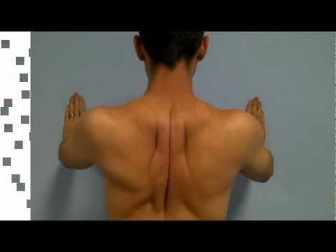 Back Pain Between the Shoulder Blades - PainChiropractor.com