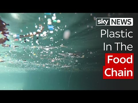 Plastic In The Food Chain