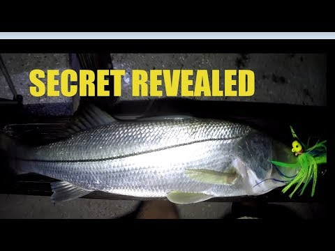 Catching Big Snook From Shore Fishing With Jigs