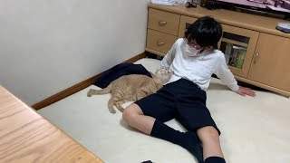 Download 息子の彼女?みたいな猫がかわいい Video