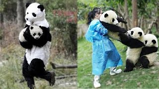 Try Not To Laugh - Funny Panda Video 2021   Pets Town