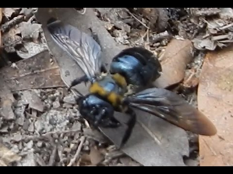WD40 and Carpenter Bees