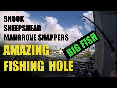 Catching Snook Sheepshead Mangrove Snapper Near Structure