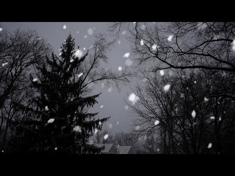 Free Stock Footage Snow Falling with Trees Motion Background HD 1080P