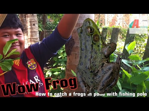 13 years old boy hunting frog in pond with fishing pole- catch frog