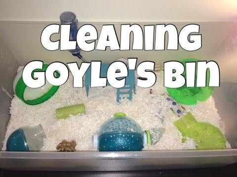 Cleaning the Hamster Bin