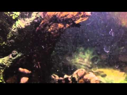 White worms in my aquarium