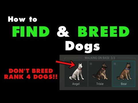 How to Find and Breed Dogs in Last Day on Earth (v.1.7.12) (Vid#120)