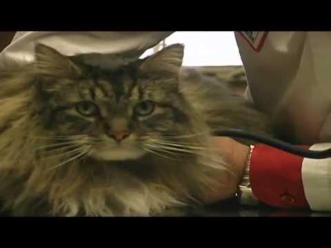 Feline Vomiting and Diarrhea