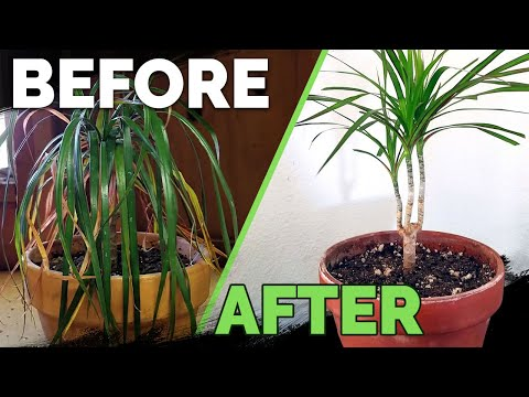 Houseplant Care: Bring Your Houseplant Back to Life!
