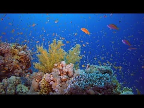 Tropical Coral Reef | Stock Footage