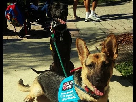 Human Aggression and Territorial Dog Rehab- Take the Lead K9 Training