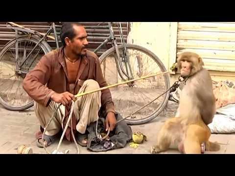 Xxx Mp4 Kutta Aur Bandriya Ka Khel Comedy Video From My Phone 3gp Sex