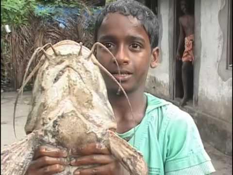 Nandakumar with African Mushi