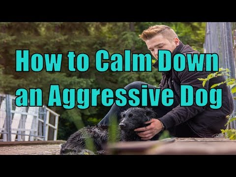 How to Calm Down A Dog Showing Aggression Towards People , Aggressive Dog Training, Doggy Dan