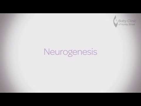 Neurogenesis - Nutrition for baby development