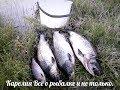 Download Видео бомба.  Лосось на лайтовый спининг, кто кого, рыбалка мечта. MP3,3GP,MP4