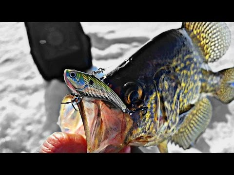 Icing Big Crappies on a Slab Rap Ice Fishing 2016-17