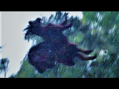 13 BIZARRE Paranormal Creatures