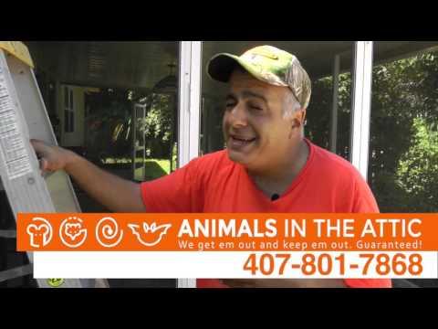 Removing Rats and Rat Entry Points, Rat Exterminator, Orlando, FL