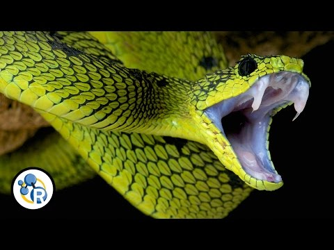 Why Is Snake Venom So Deadly?