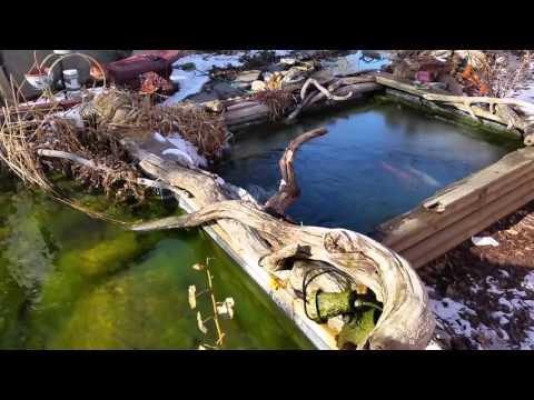Spring pond Algae removal...